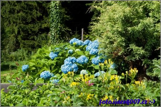 krásný pohled na modré květy na cestě na rejvízu