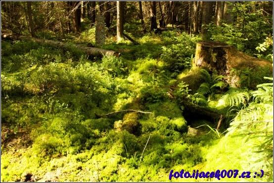 pohled na krásnou zeleň rejvízu