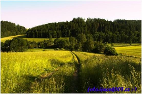 Louka nad obcí a za ní les