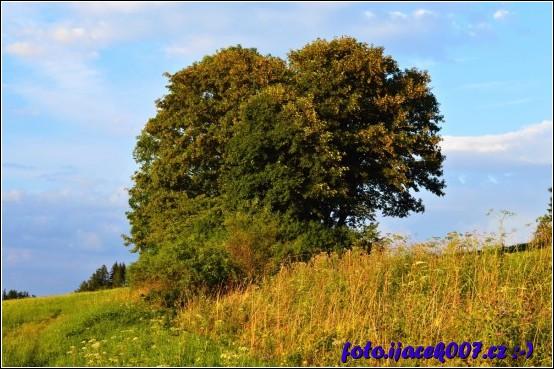 Krásný strom uprostřed louky