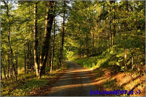Lesní cesta a hra světel