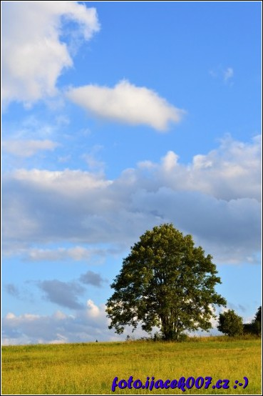 Strom na louku s mraky