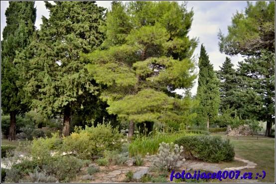 pohled na vzrostlé stromy uprostřed zahrady