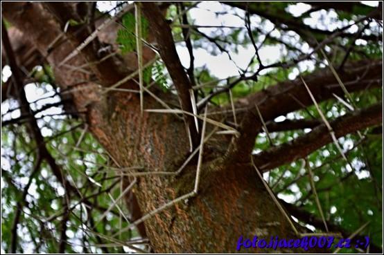 zvláštní strom s trny