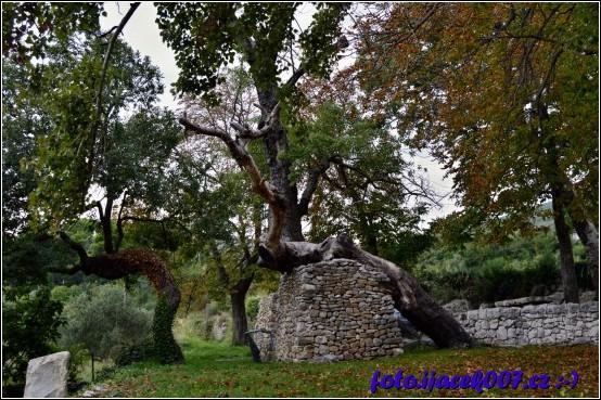 strom podložený zdí