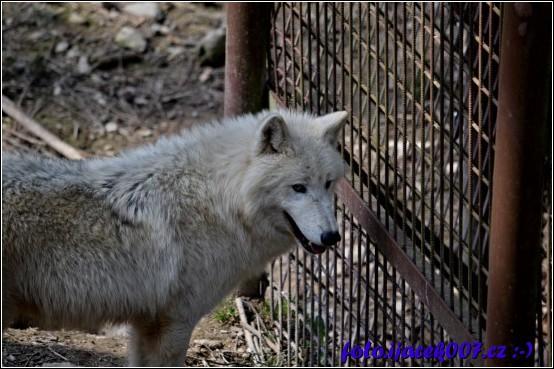 Výběh Vlků
