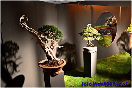 součástí výstavy flora byla i výstava bonsaji
