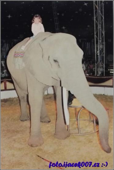 Na slonovy v cirkusu Humberto