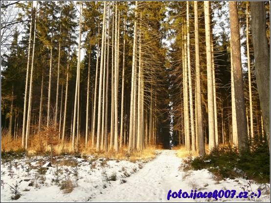 Pohled na začátek hustého lesa.